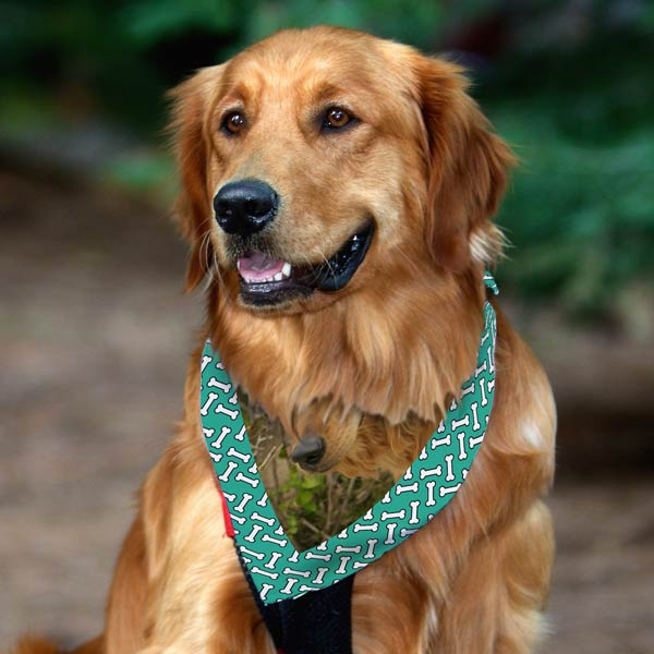 Gift your dog with the perfect fashion accessory and create a photo dog bandana just for him.
